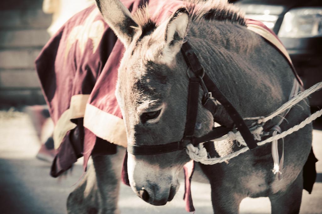 https://pixabay.com/photos/donkey-mammal-animal-horse-ears-4594928/